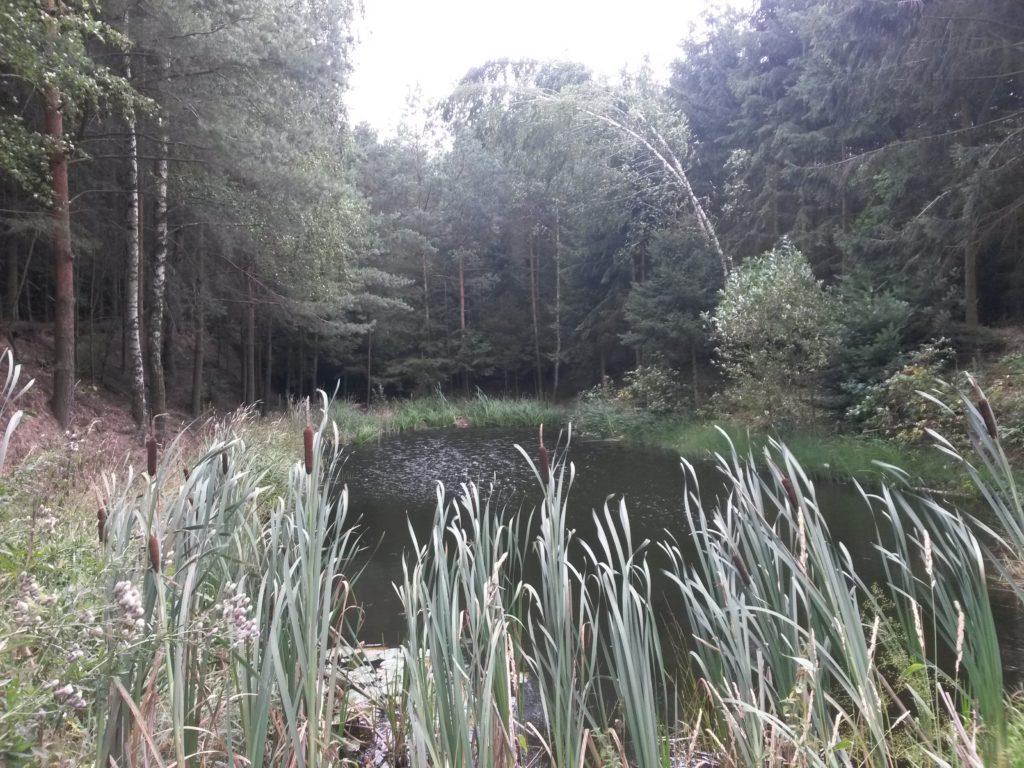 Naprosto nelogické jezírko mezi polem a lesem.